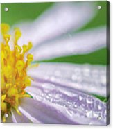 Rain Drop On Flower Acrylic Print