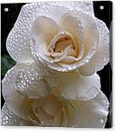 Rain Drop Roses Acrylic Print