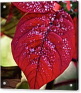 Rain Drops On Red Leaves Acrylic Print