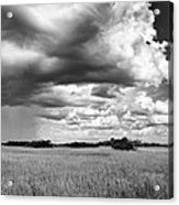 Rain Everglades Acrylic Print
