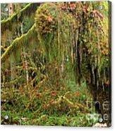 Rain Forest Crocodile Acrylic Print