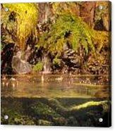 Rain Forest Pool Acrylic Print