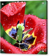 Rain Kissed Acrylic Print