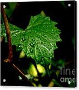 Rain On Ivy Acrylic Print