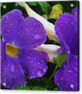 Rain On Purple Wonder Acrylic Print