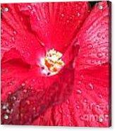 Rain On Red Acrylic Print