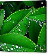 Rain Patterns Acrylic Print