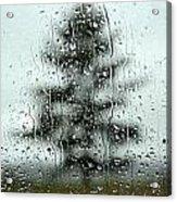 Rain Tree Acrylic Print