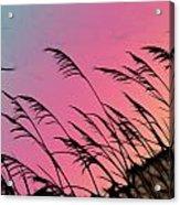 Rainbow Batik Sea Grass Gradient Silhouette Acrylic Print