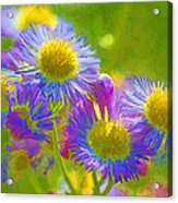 Rainbow Colored Weed Daisies Acrylic Print