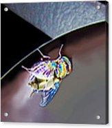Rainbow Fly Acrylic Print