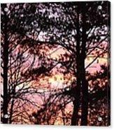 Rainbow Forest Acrylic Print