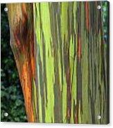 Rainbow Gum Tree Hawaii Acrylic Print