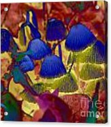 Rainbow Mushrooms Acrylic Print