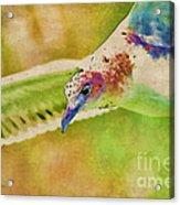Rainbow Seagull Acrylic Print