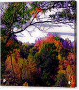 Rainbow Treetops Acrylic Print by DigiArt Diaries by Vicky B Fuller