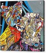 Rainbow Yorkies Acrylic Print