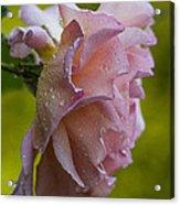 Raindrops. Acrylic Print
