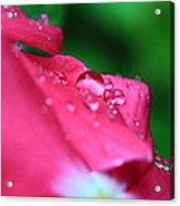 Raindrops On A Flower I Acrylic Print
