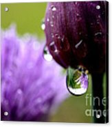 Raindrops On Chives Acrylic Print