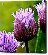 Raindrops On Chives Triptych Acrylic Print