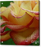 Raindrops On Petals Acrylic Print