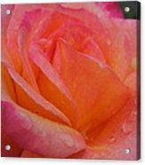 Raindrops On Roses Nine Acrylic Print