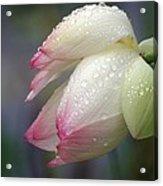 Rained Upon Acrylic Print
