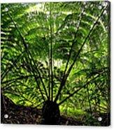 Rainforest Backlight Acrylic Print