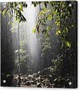 Rainforest, Bellingen, Australia Acrylic Print