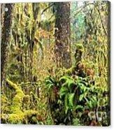 Rainforest Salad Bar Acrylic Print