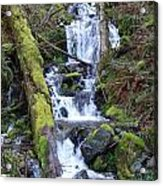 Rainforest Waterfall Acrylic Print