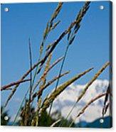 Rainier Weeds Acrylic Print