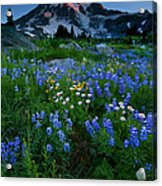 Rainier Wildflower Dawn Acrylic Print by Mike  Dawson