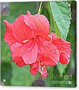 Rainy Day Hibiscus Acrylic Print