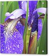 Rainy Day Iris  Acrylic Print