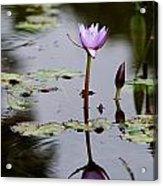 Rainy Day Lotus Flower Reflections V Acrylic Print