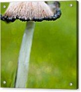 Rainy Day Mushroom Acrylic Print