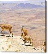Ramon Crater Negev Israel Acrylic Print