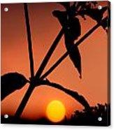 Raphael Sunset 1 Acrylic Print