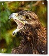 Raptor Rage Acrylic Print