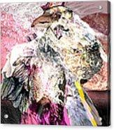 Raven 6 Acrylic Print