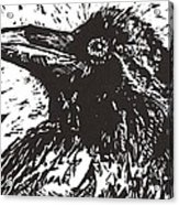 Raven Acrylic Print by Julia Forsyth