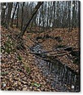 Ravine Creek Acrylic Print