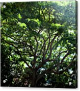 Reach High And Wide Acrylic Print