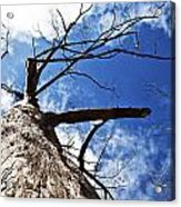 Reach The Sky Acrylic Print