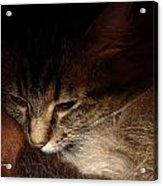 Ready For A Cat Nap Acrylic Print