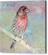 Ready To Sing My Song Acrylic Print