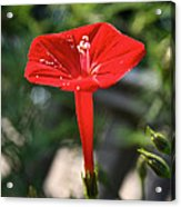Real Red Acrylic Print