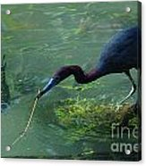 Really A Twig Acrylic Print